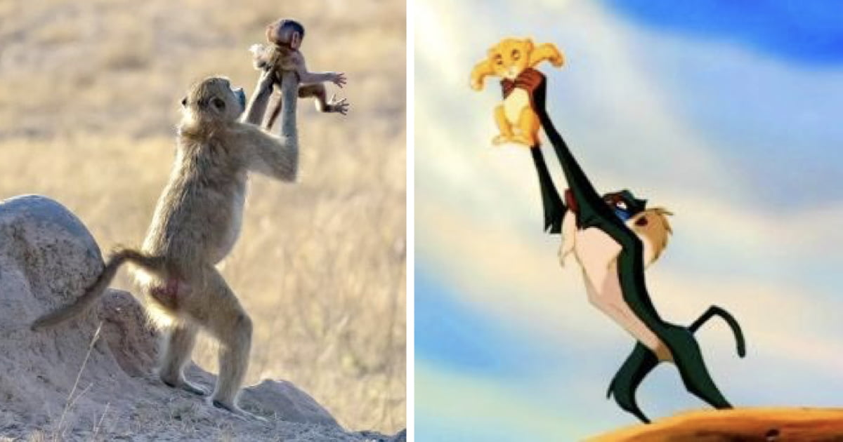 Monkey Recreates Iconic 'The Lion King' Scene With Its Baby