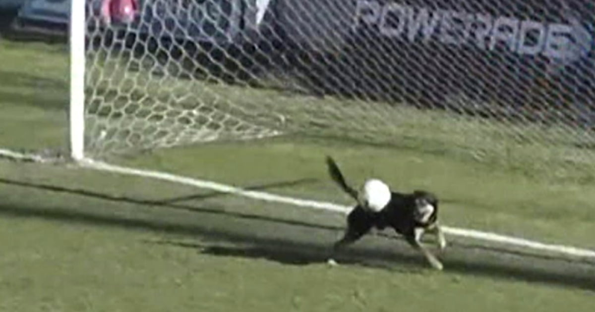 Watch This Dog Makes An Incredible Goal-line Save