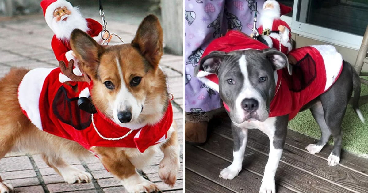 This Christmas Costume Turns Your Pet Into Santa's Sleigh