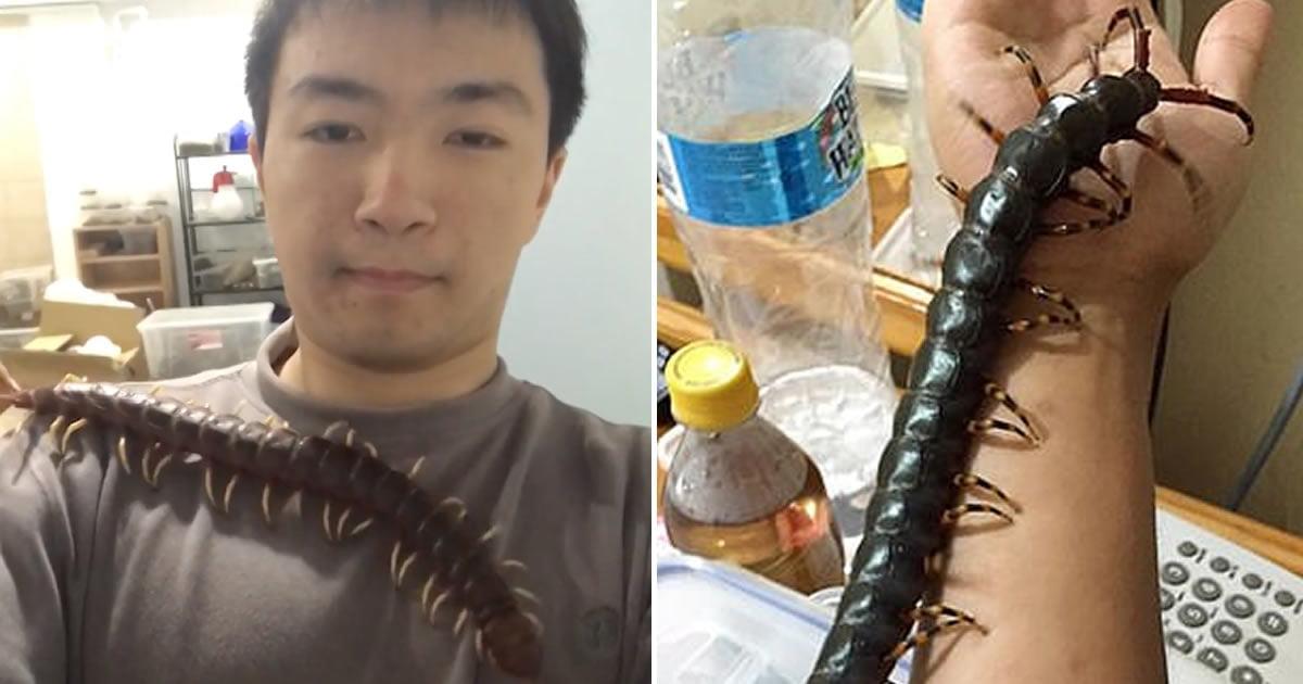 Student Lovingly Bonds With His 43cm Venomous Pet Centipede, Makes Your Skin Crawl