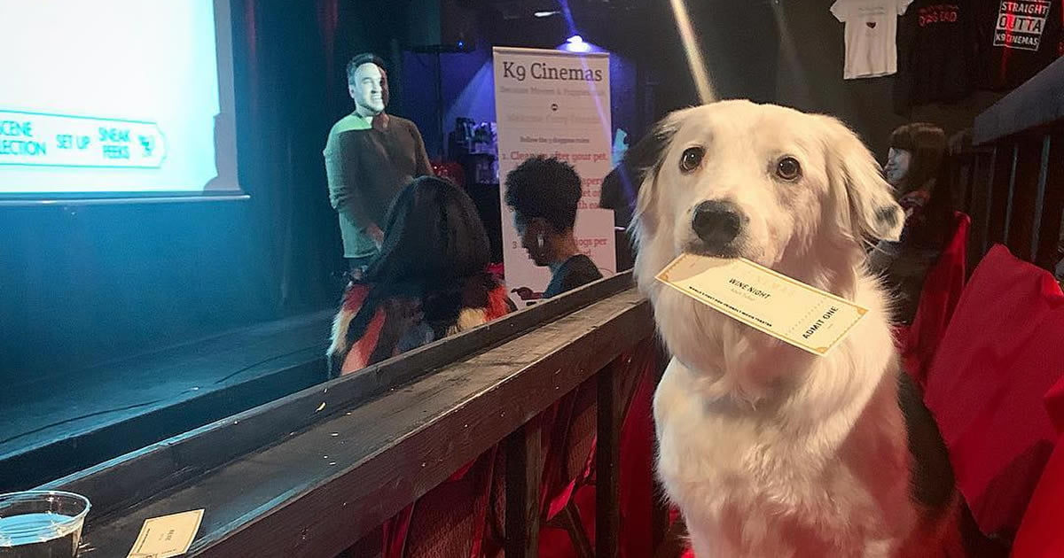 Movie Theater In Texas Allows You To Bring Your Dog And The Ticket Includes Bottomless Wine