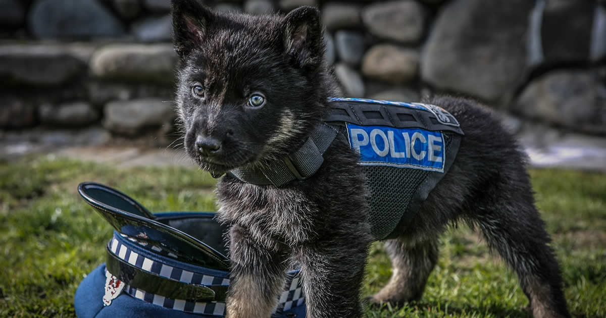 New Zealand Police Told To Stop Posting Their Cute Puppies And Get Back To Work