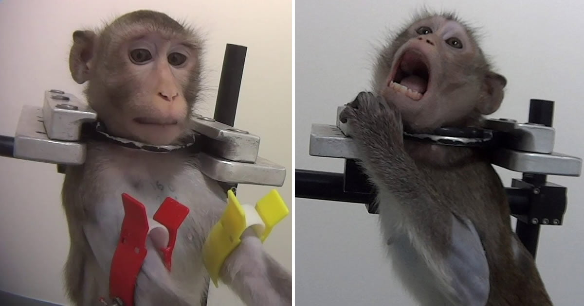 Strapped Animals Were Filmed Screaming During Test In German Lab