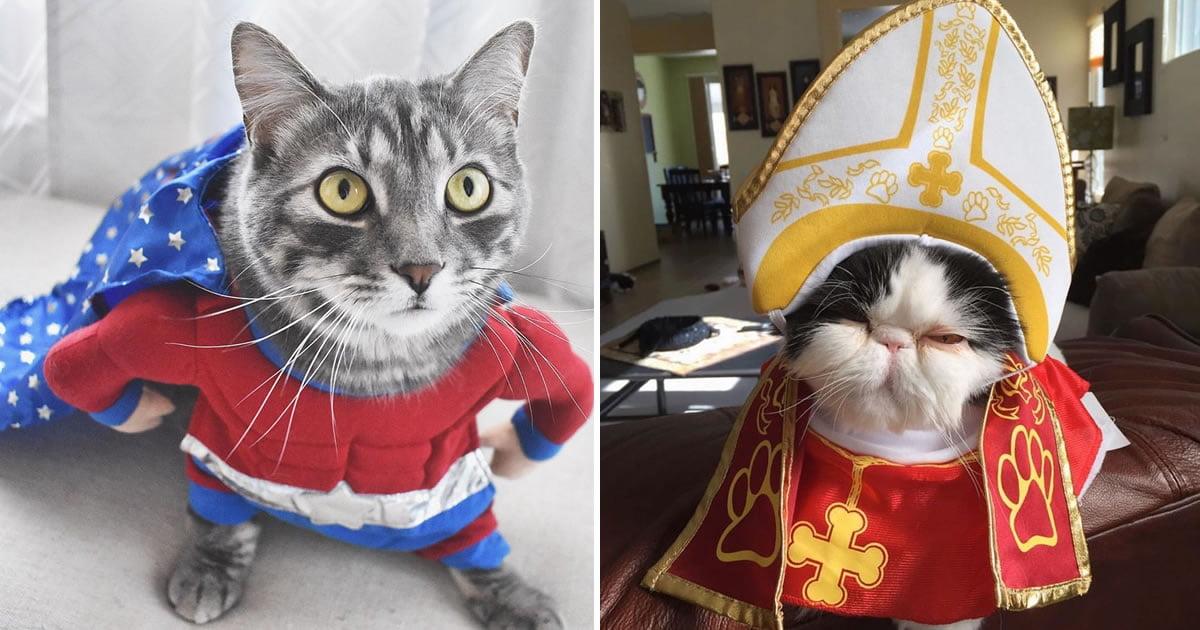 Halloween Kostueme 9gag.21 Adorable Halloween Costume Ideas For Your Cat 9gag
