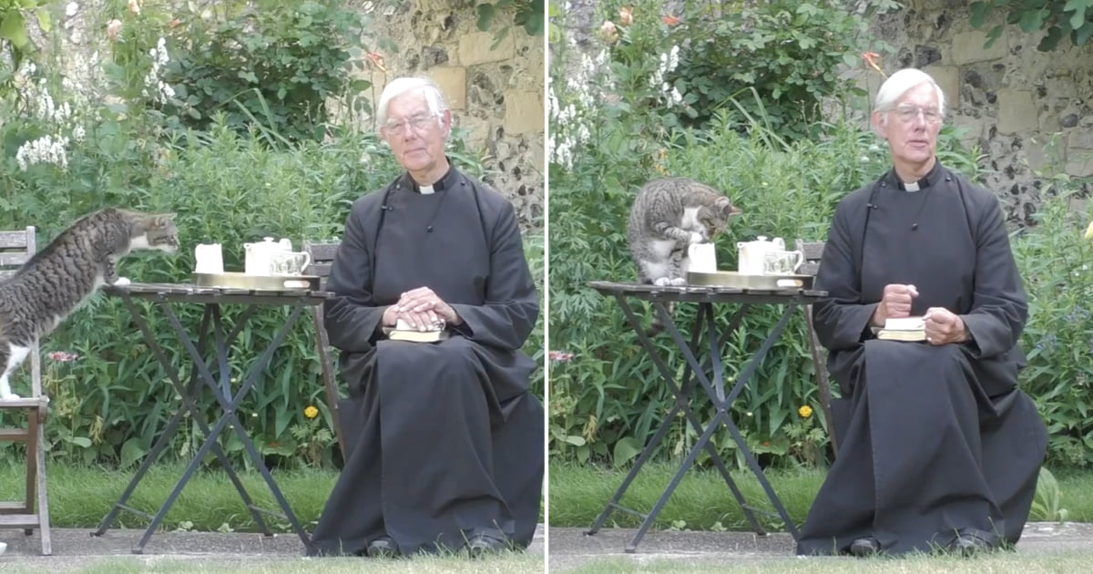 Cat Steals Dean Of Canterbury's Milk During Online Prayer Service ...