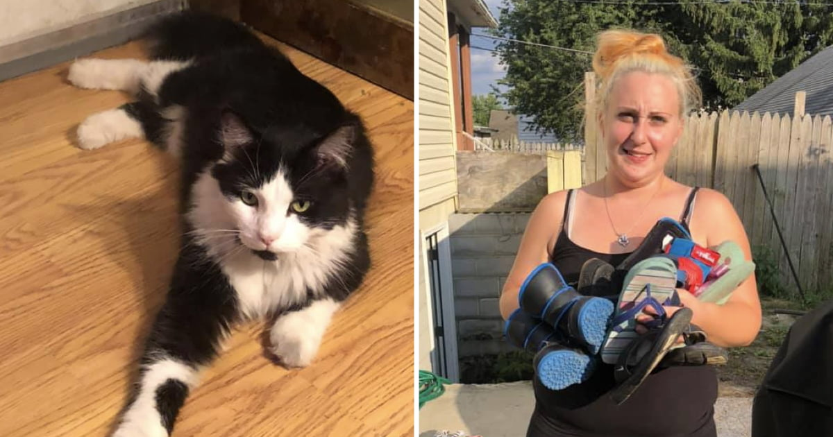 Owner Creates Facebook Group To Return Shoes That Her Cat Stole