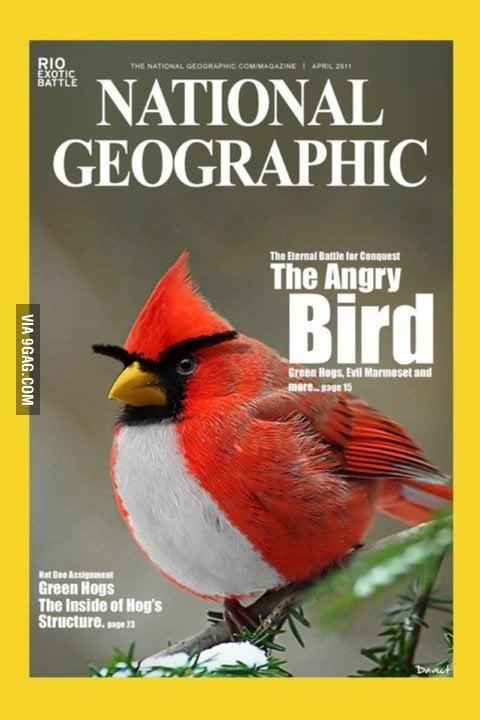 Angry Bird IRL