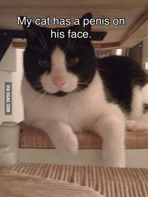 Just my cat...