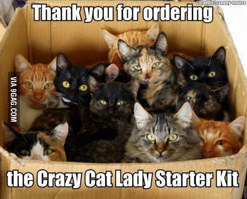 The Crazy cat lady starter kit is here