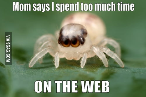 Cutest spider ever