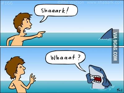 Shaaaaaark!!!!!!!