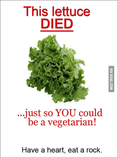 This lettuce died...