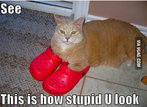 Stupid crocs