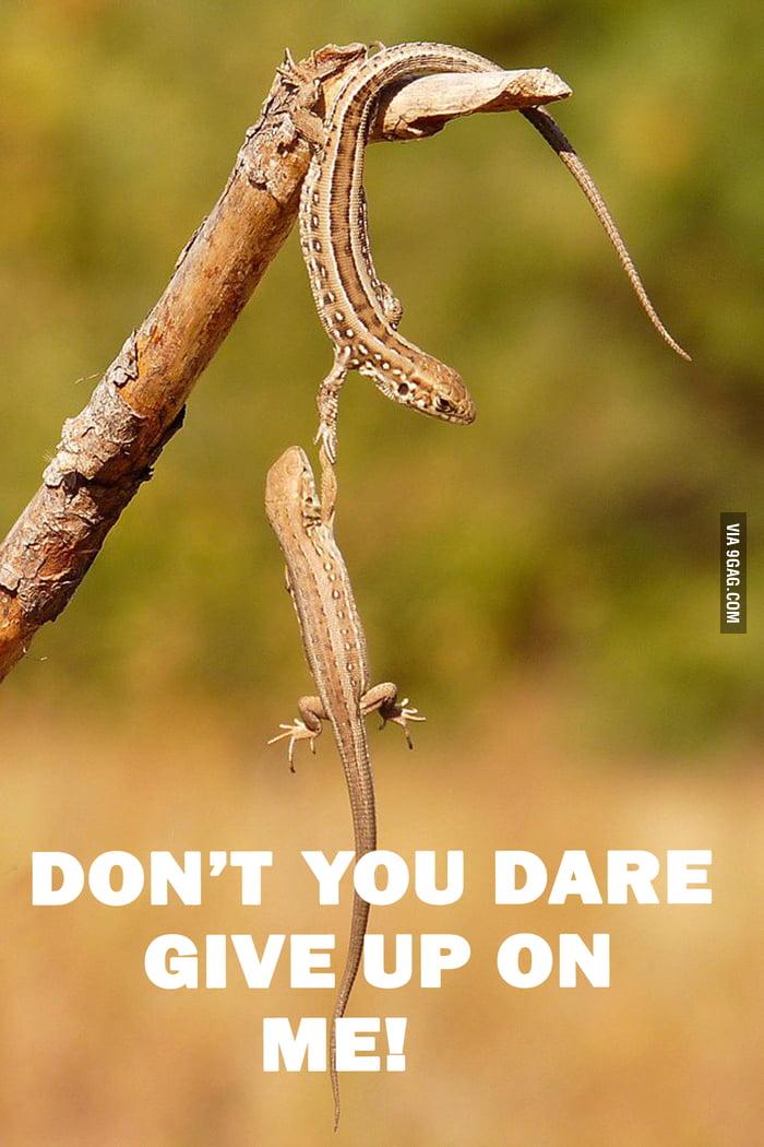 Faith On Lizards Restored