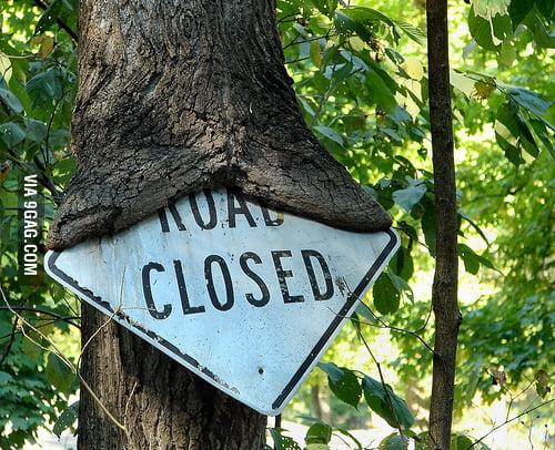 Road Closed Tree