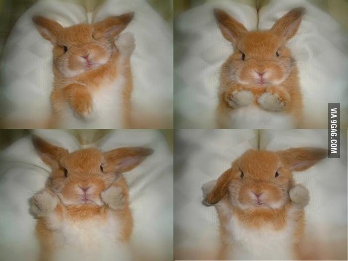 Cute Bunny!