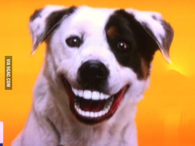 Dog With Human Teeth Meme
