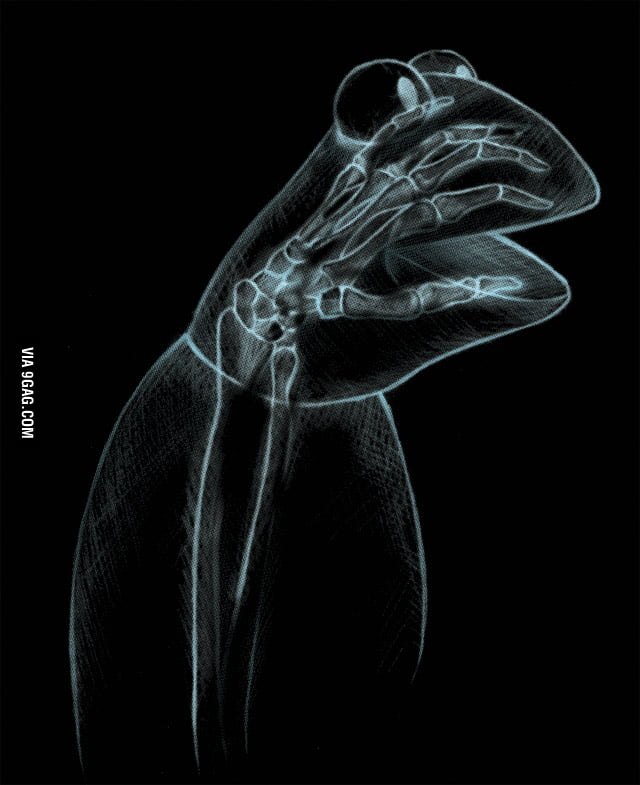 X-Ray of Kermit the Frog