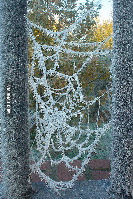 Just a frozen spider web