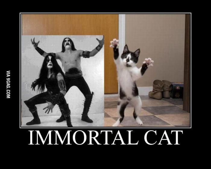 Immortal Cat
