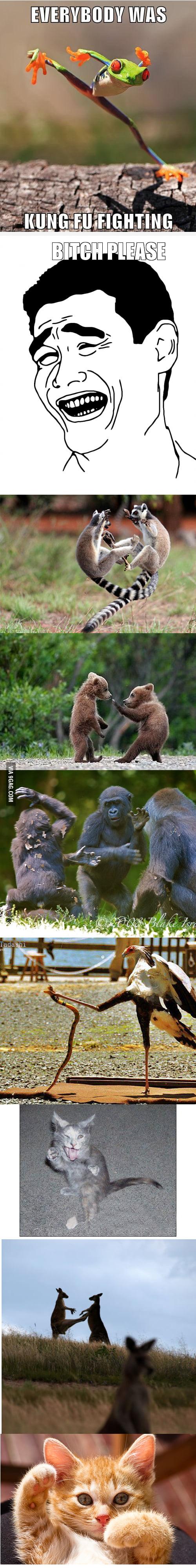 Karate animals
