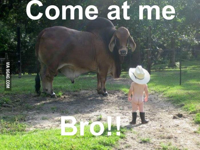 Come at me bro!!