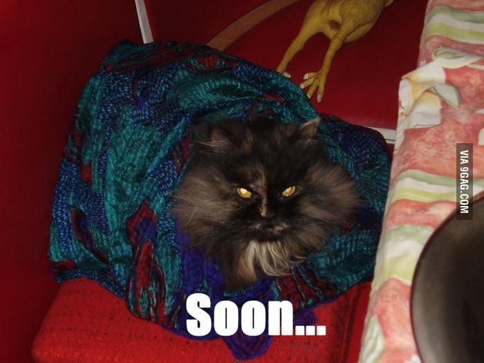 Just my cat....