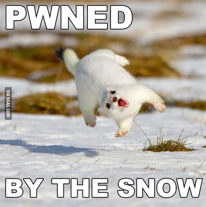 Just a cute animal tripping over snow...