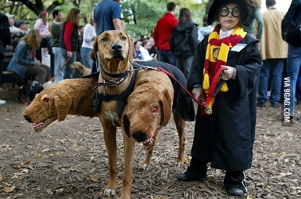 Harry Potter cosplay WIN