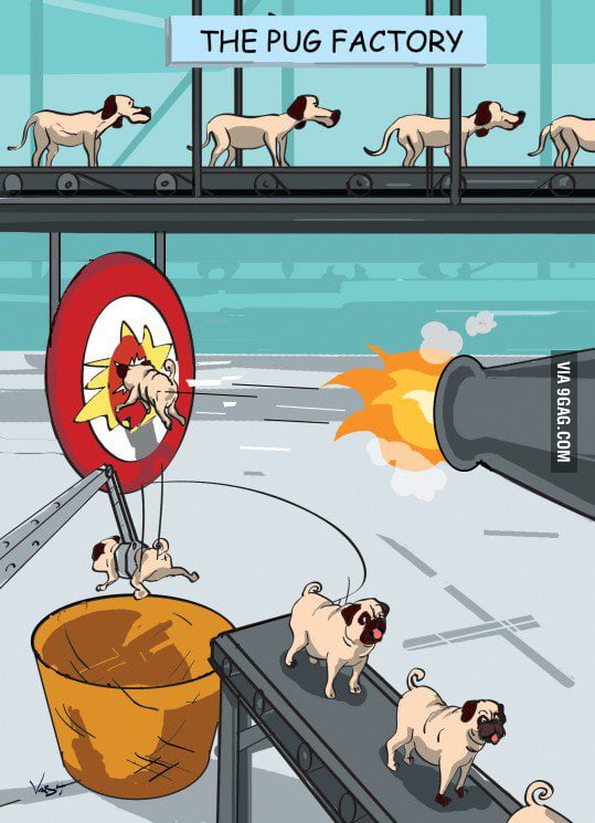 How pugs are made.. wait.. what!?