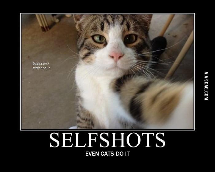 Cat selfshot!