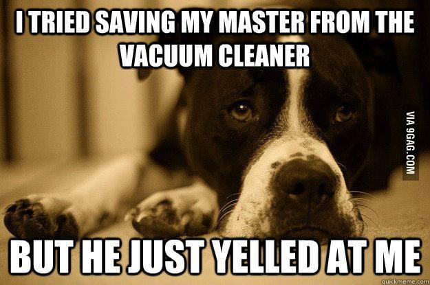 Just dog problems