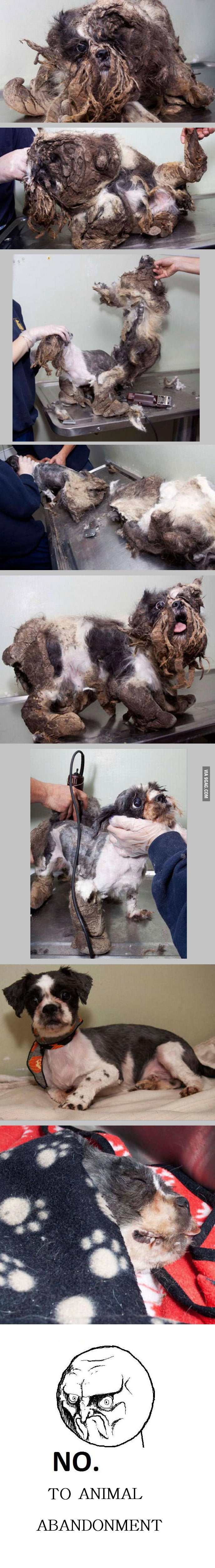 Doggie´s first haircut