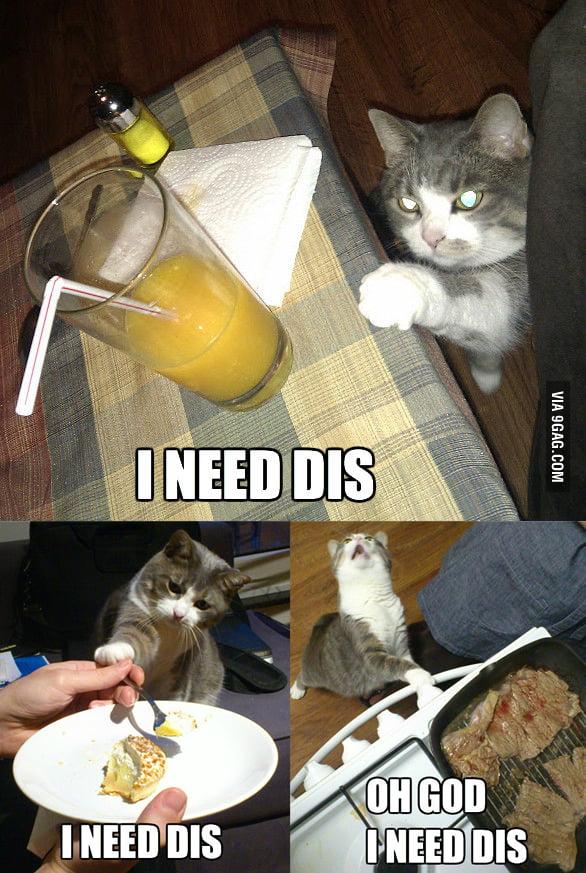 Cat's needs.