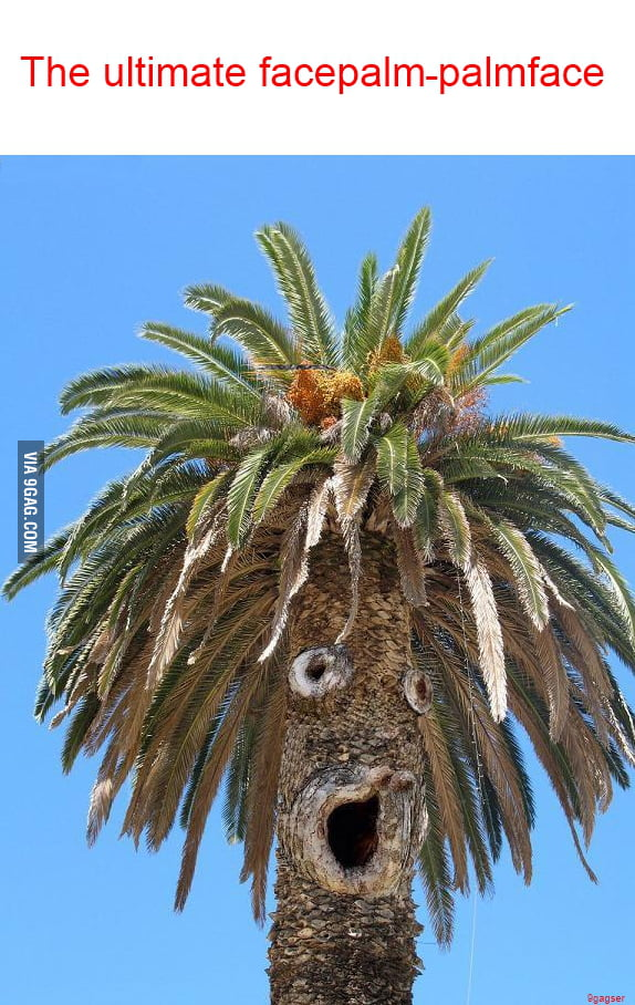 Facepalm-level: palm tree