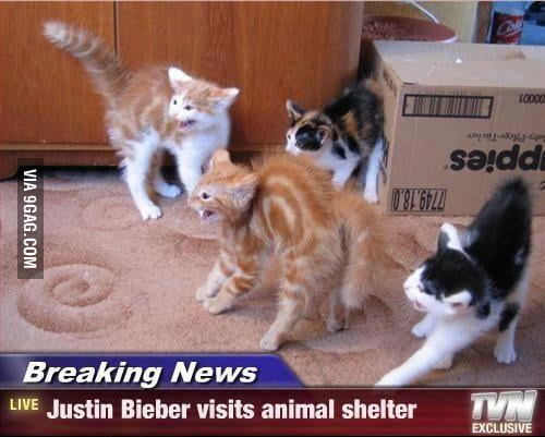 Justin Bieber Visits the Animal Shelter