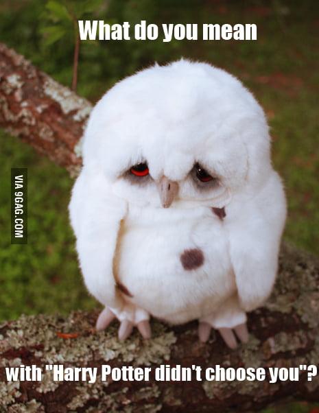 Damn you Hedwig!