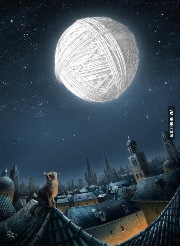 Kitten's dream