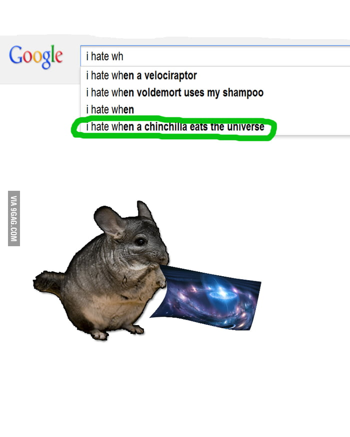 I Hate When Pins Don T Actually Link To Where You Can Buy: I Hate When A Chinchilla Eats The Universe