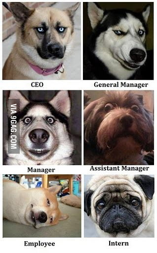 How Dogs explain management...