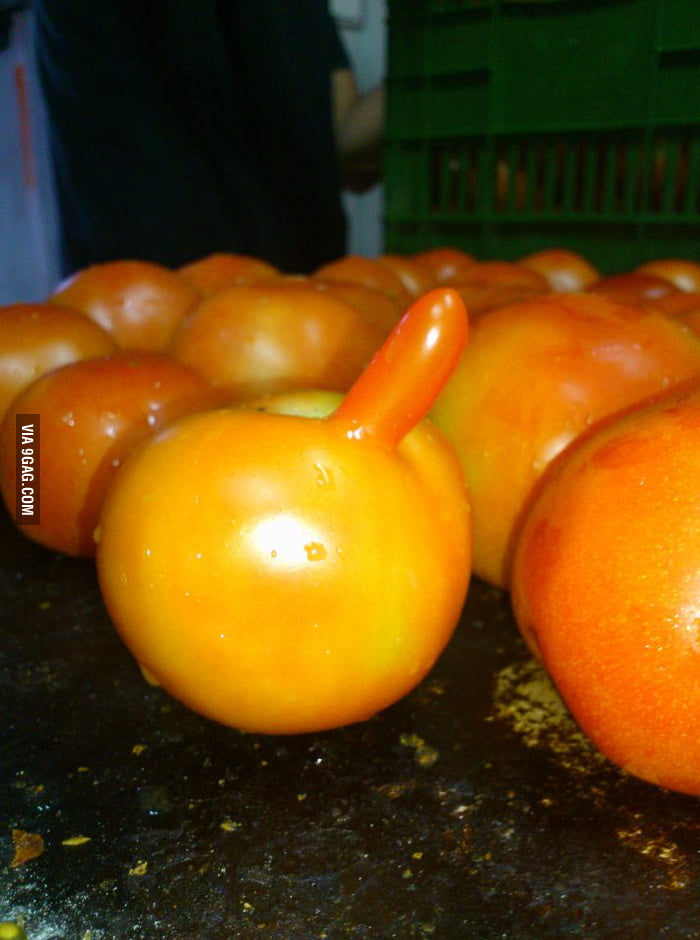 Is that a tomato or you just happy to see me?