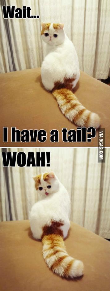 A tail?WOAH!!!