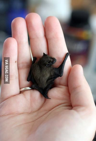 Behold, the baby bat!