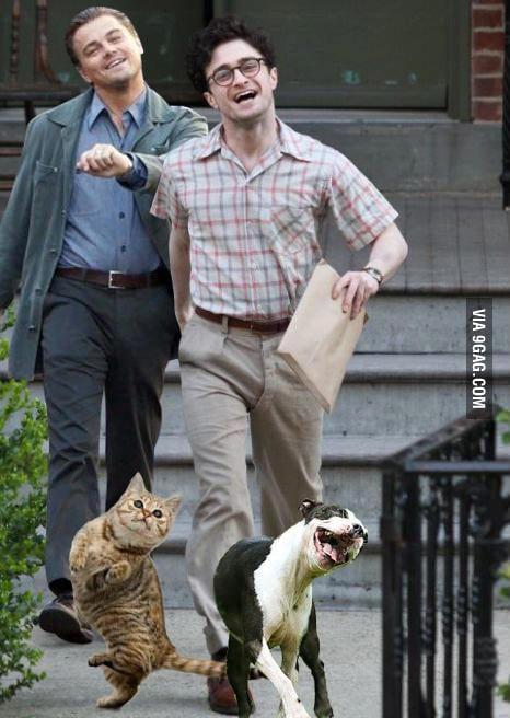 Just Leonardo Dicaprio, Daniel Radcliffe and their pets....