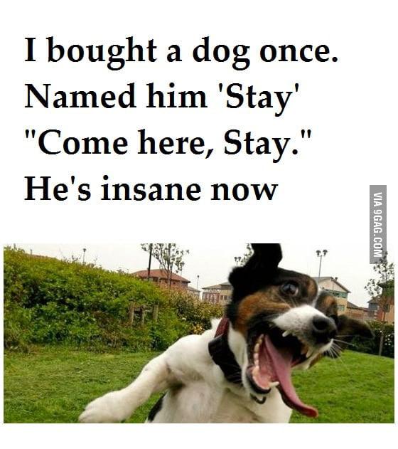 I bought a dog once...