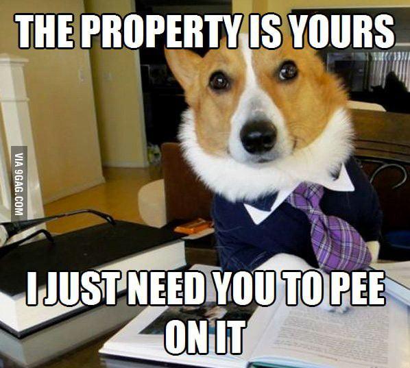 Real Estate Lawyer Dog