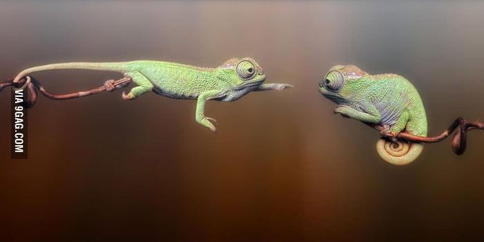 Just Chameleons