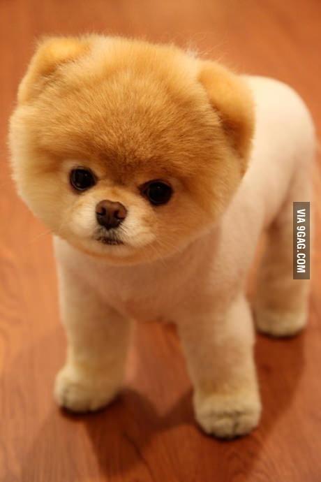 cuteness level 100000000000000000000000 9gag