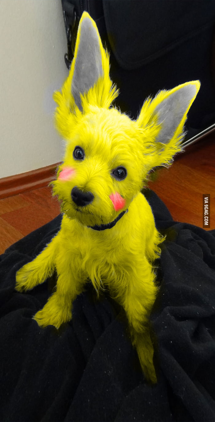 a wild pikachu appears 9gag