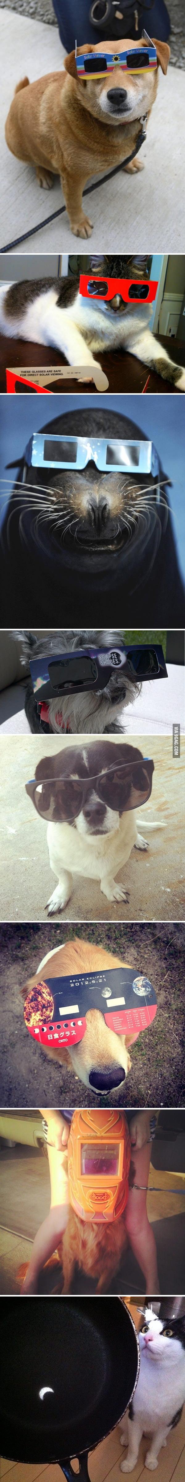 Animals Watching The Solar Eclipse